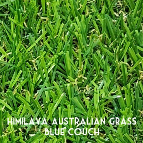 Himilaya-Grass-BlueCouch