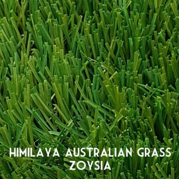 Himilaya-Grass-Zoysia