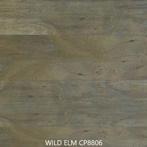 Flinders-Range-WildElm-CP8806